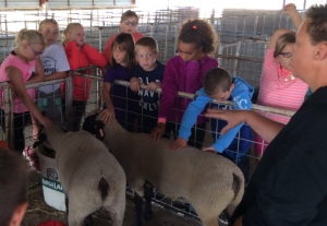 At a recent event, youth were able to see livestock first-hand. This session, youth enjoyed learning about sheep production.