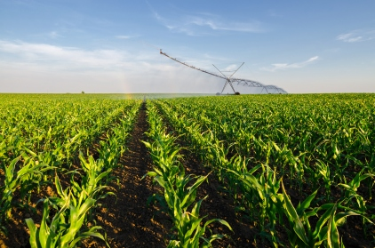 Agricultural irrigation system watering corn field in summer