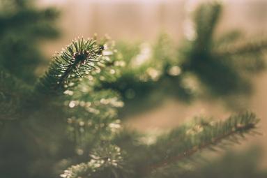 evergreentree.jpeg