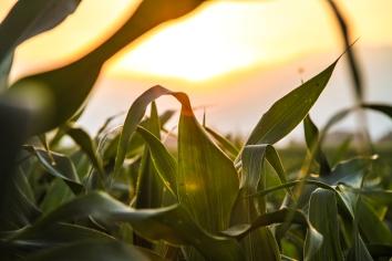 nature-field-sun-agriculture